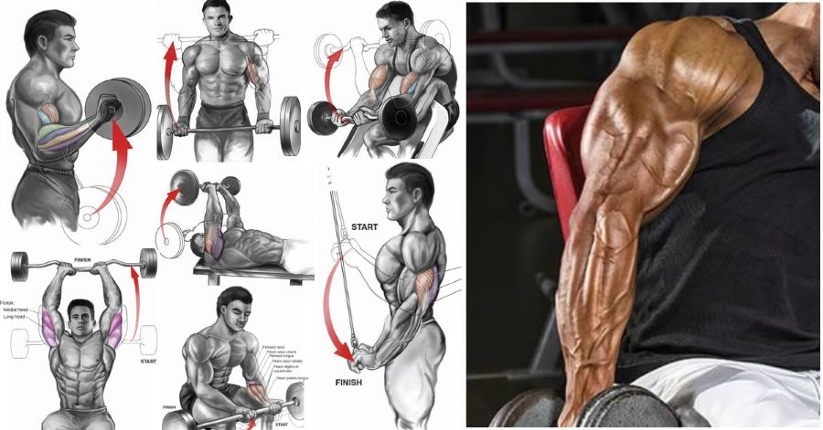 best-bicep-and-tricep-exercises-for-mass.jpg