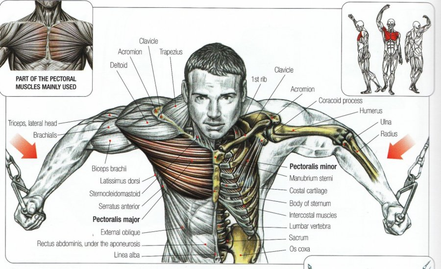cable-exercises-1024x623.jpg