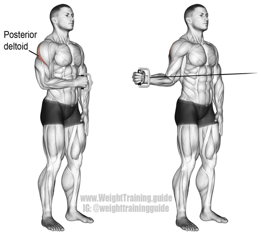 Cable-Standing-Shoulder-External-Rotation.png