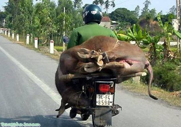 Crazy-Transportation-In-Vietnam-Very-Funny-Real-Life-Images-Bevappha-Sanam-5.jpg