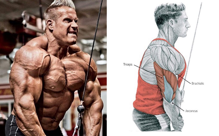 The 8 Best Muscle-Building Triceps Exercises!.png