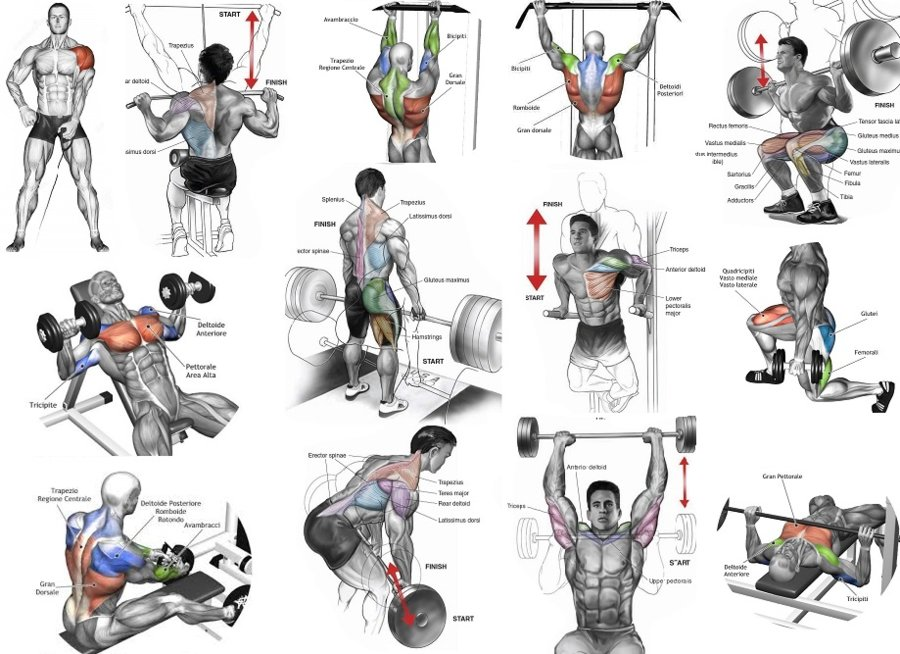 Top Muscle Building Workouts For Men.jpg